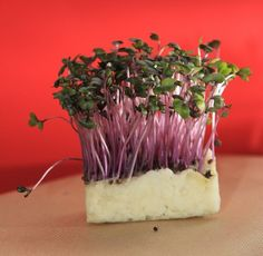 ломкие стебли кресс-салата