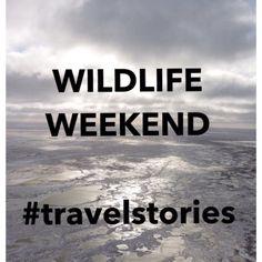Wildlife Weekend in Canada on lechatsurlabanquette.com/