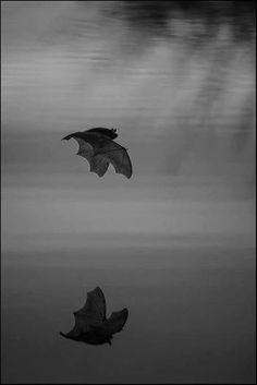 Beautiful Bat Photo