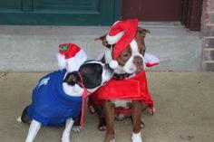 Bella and Buster.  Christmas Kiss