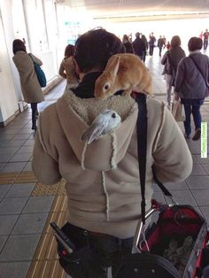Spotted this guy and his buddies in Tokyo today, Funny Images, Photos Online, Funny Jokes, is a funny way in life! Funny Bunnies, Cute Funny Animals, Cute Bunny, Funny Cute, Bunny Meme, Hilarious Sayings, 9gag Funny, Funny Signs, Animals And Pets