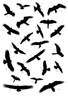 Birds Flying Silhouette Tattoo Clipart - Free to use Clip Art Resource