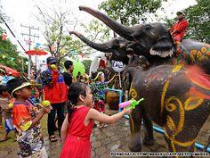 Songkran Festival in Thailand:  Water for elephants