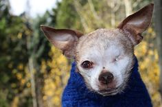 Harley, the puppy mill survivor, was interviewed by Canine Journal. Read what he had to say! http://www.caninejournal.com/harley-the-dog/
