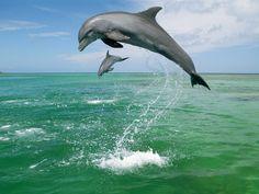 Delfín, símbolo de la inteligencia, nobleza, valores puros y buena suerte y amistad.