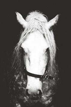 Blanco y negro fotografía decoración de la pared del caballo