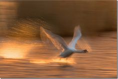 motion-blur-photos-34