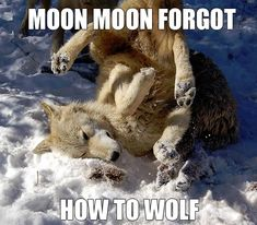 Moon Moon at his finest, don't usually pin Moon Moon stuff but this is hilarious!