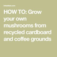 HOW TO: Grow your own mushrooms from recycled cardboard and coffee grounds