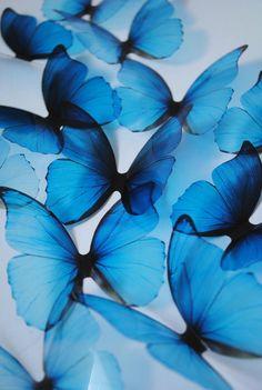 Blue rainbow butterflies - 3D acetate butterflies - ombre blue butterfly - 3D Blue butterfly - something blue - blue butterfly wall decor