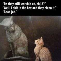 20+ Funny Animal Pictures Of Today - #funnymemes #funnypictures #humor #funnytexts #funnyquotes #funnyanimals #funny #lol #haha #memes #entertainment #hilarious #meme