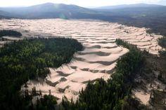 森林をのみ込む砂漠のようなデューン=6月22日、米アラスカ州ノームから東約400キロ、本社機から、葛谷晋吾撮影 ▼17Jul2017朝日新聞|アラスカの森に「砂漠」の段々畑 永久凍土解けて変化か http://www.asahi.com/articles/photo/AS20170717000023.html