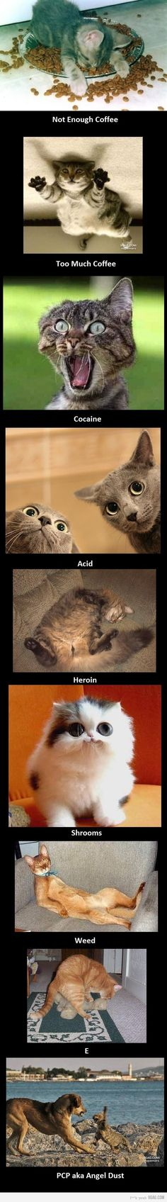 Talk to your cats about drugs.