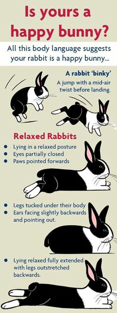 Is yours a happy bunny? Rabbit body language signs for a happy bunny- I guess Scruffy is actually happy! Bunny Cages, Rabbit Cages, House Rabbit, Rabbit Life, Bunny Toys, Baby Bunnies, Cute Bunny, Lionhead Bunnies, Pet Bunny Rabbits