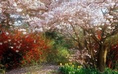 Preview wallpaper cherry, garden, spring, flowering, tulips