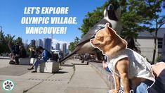 Dog Walk and Tour of Vancouver, British Columbia, Canada Olympic Village, Minka, Dog Walking, British Columbia, Olympics, Vancouver, Pup, Canada, Tours