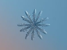 Snowflake photography brings you up close with ice crystals Fotografia Macro, Close Up Pictures, Pictures To Paint, Snowflake Photography, Snowflake Photos, Real Snowflakes, Snowflake Snowflake, Snowflakes Falling, Snowflake Designs