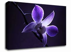 Purple Heaven floral canvas from only £19.99 at Infusion Art http://www.infusionart.co.uk/products/Purple-Heaven-251351.aspx