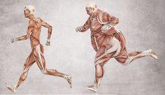 ГОРМОН ИНСУЛИН: ВСЕ, ЧТО НЕОБХОДИМО ЗНАТЬ. Путешествие в страну ожирения и метаболического синдрома начинается и заканчивается с гормоном инсулином. Инсулин трансформирует сахар в жир. Инсулин стимулирует увеличение содержимого жировых клеток.…