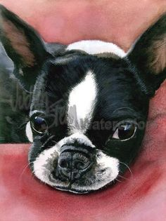 BOSTON TERRIER Dog Pet Portrait Watercolor Painting Print by k9stein on Etsy https://www.etsy.com/listing/111879492/boston-terrier-dog-pet-portrait