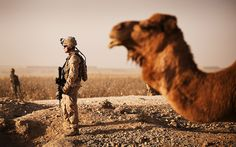 These mammoth camels only live in northern Iraq. Good thing they are gentile or this unsuspecting Marine would be in trouble. Military Humor, Military Personnel, Marine Mom, Marine Corps, Team Leader, A Team, Usmc, Marines, Uss Ronald Reagan