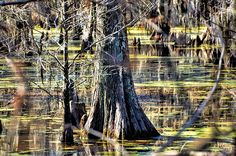 Diana Mary Sharpton captures ~ that feeling in the Bayou one where anything can happen-reflections of time gone by