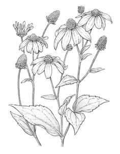 Image result for black and white pictures of flower bouquets to color