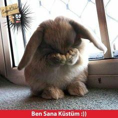 Günaydın, Güzel İnsan, Günaydın, Sevgi, Barış, Kardeşlik! ☕☕☕ Memes Funny Faces, Funny Ads, Funny Laugh, Funny Happy, Cute Cats And Dogs, Animals And Pets, Funny Photos, Cute Pictures, Funny Times