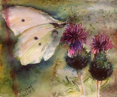 Done for a tribute to David Smith, (Pixelbloke) on PMP who was a wonderful photographer who died recently. This is called Flutterby and goes well with Buttermouse that I painted from his collection a couple of years ago. Watercolour 8 x 8
