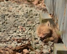 Baby foxes found in an NJ backyard - Album on Imgur