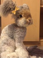 Meet Wally, The Instagram-Famous Bunny Of Your Dreams #refinery29