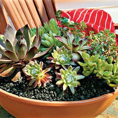 How To Plant Succulents in Containers | SouthernLiving.com