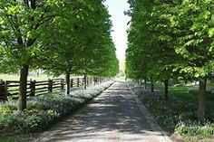 Plants as ground cover rather than grass - beneath the pear trees