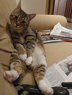 Dewey sits funny