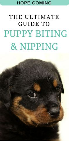 how to stop a puppy from biting | how to train a puppy not to bite | stop puppy biting | puppy teething | puppy training tips | puppy biting | puppy biting tips | Puppy training basics | puppy training tips | more at http://hope-coming.com/