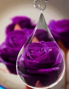 Purple Rose inside of a Raindrop