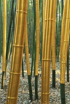 Cecile Andrieu / Land Art / La Bambouseraie Photo : Jean du Boisberranger try it out. i like them so much