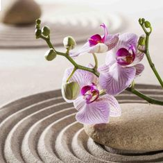 Photo about Orchids set in curves of sand and zen pebble in asian feng-shui garden. Image of harmony, purity, serenity - 36175115 Zen Sand Garden, Meditation Garden, Meditation Music, Stone Wallpaper, Wall Wallpaper, Ikebana, Reiki, Feng Shui Garden, Feng Shui Symbols