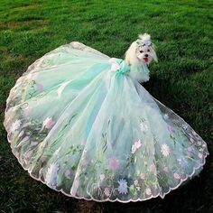 One of our Wedding dresses for dogs Dog Wedding Outfits, Dog Wedding Dress, Wedding Skirt, Dog Wedding Attire, Witch Wedding, Dog Outfits, Wedding Dresses, Puppy Clothes Girl, Cute Dog Clothes