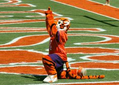 In the end-zone where we belong. Clemson Athletics, Clemson Football, College Football Teams, Tiger Girl, Tiger Cub, Southern Girls, Southern Pride, Fight Tiger, Clemson Tiger Paw