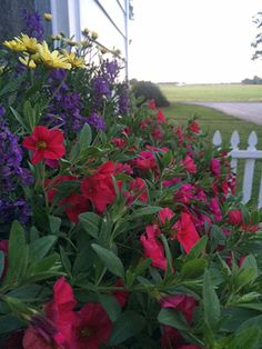 Perfect combination article page Will Smith, Gardens, Country, Flowers, Plants, Rural Area, Outdoor Gardens, Country Music, Plant