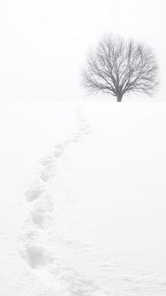 . Winter Day, Winter Snow, Winter White, Black And White Landscape, Winter's Tale, Minimalist Photography, Winter Beauty, Winter Scenes, Tree Art