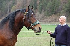 Noriker stallion Müller Diamant XII