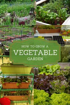 Fall Vegetable Gardening The experts weigh in. Everything you need to know for growing your own vegetable garden. From vegetable gardening indoors, to raised bed gardening to container vegetable gardening. We covered it all. Fall Vegetables, Container Gardening Vegetables, Organic Vegetables, Growing Vegetables, Planting Vegetables, Vertical Vegetable Gardens, Indoor Vegetable Gardening, Indoor Garden, Organic Gardening