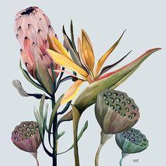 Botanical Drawings, Botanical Prints, Botanical Wall Art, Plant Illustration, Watercolor Illustration, Protea Art, Mural Art, Art Sketchbook, Graphic