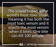 Even though it is one of the world's most venomous snakes, it is actually a shy, rarely encountered snake. .