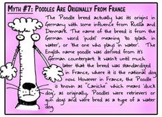 Myth #7: Poodles are Originally from France