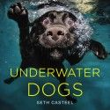 Funny Pictures Of Dogs Underwater By Seth Casteel