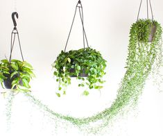 How to Hang a Plant From the Ceiling