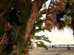 Si ella no viene, recurre al plan ve. La #RevoluciondelAmor buenos días Pimpis.  Fotografía de M. Ángeles Ramírez. #Malaga